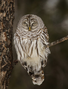 Northern Wisconsin Hiking: An Owl