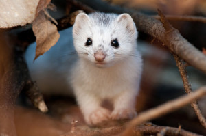 Northwoods Nature Photography: Possum in Northern Wisconsin