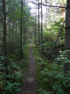 Northern Wisconsin Hiking Trails