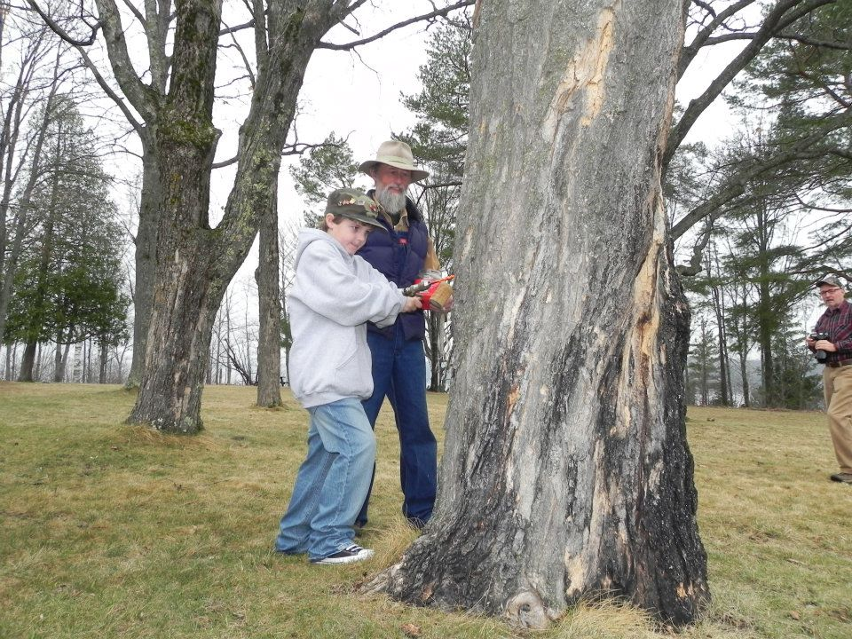 Tree tapping demonstrations
