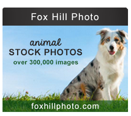 Fox-Hill-Photo-Banner