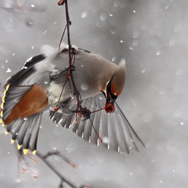 Bird Watching in Winter
