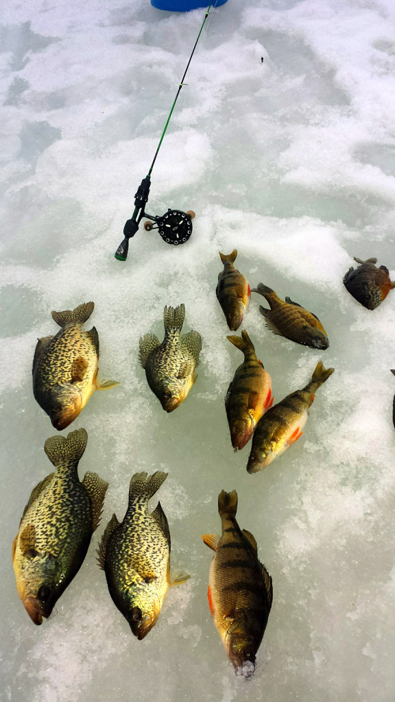 Ice Fishing Update for Phelps Area