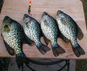 It is going to be a Crappie week