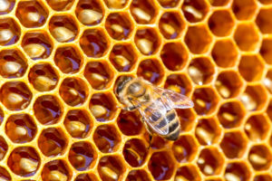 Beekeeping 101 on April 1st