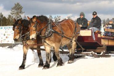 Horse Drawn Sleigh Rides