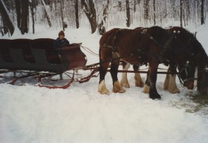 Wagon Rides in Phelps WI
