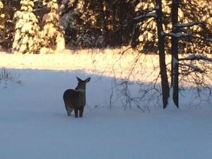 Northern Wisconsin Wildlife in Winter