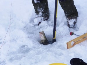 Fantastic Year-Round Fishing!