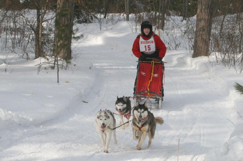 three bear dog sled races
