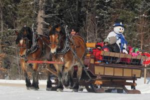 Horse Drawn Scenic Rides