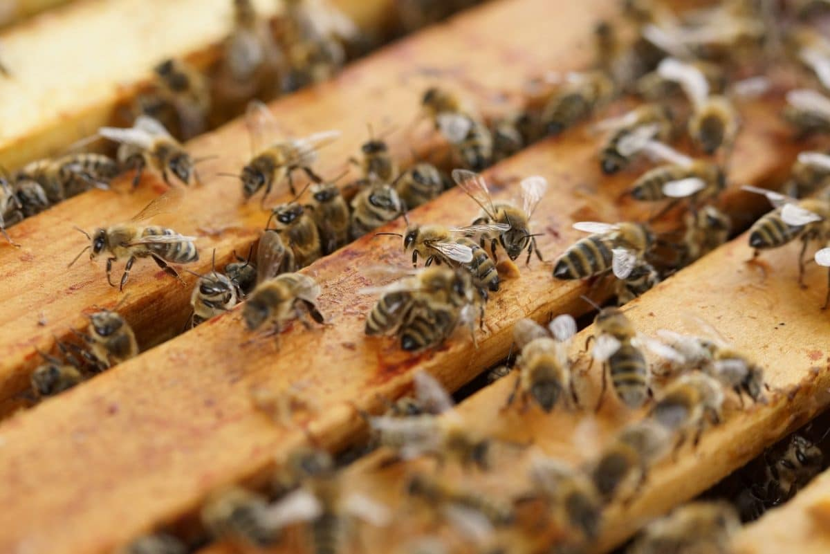 Beekeeping 101 Class